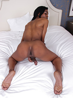 Free shemale porn pics hot shemales at shemale daily